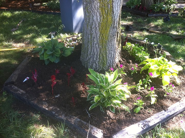 Landscaping with Plants - Wichita