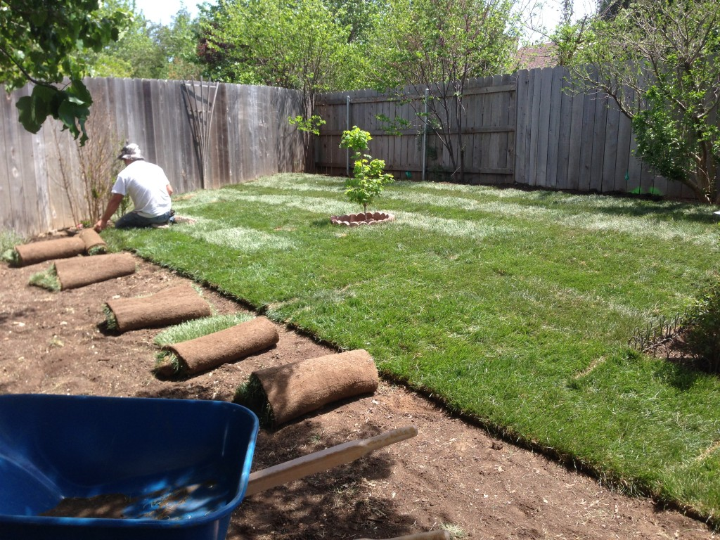 Sod installation daniels lawn and landscaping services for Lawn and garden services