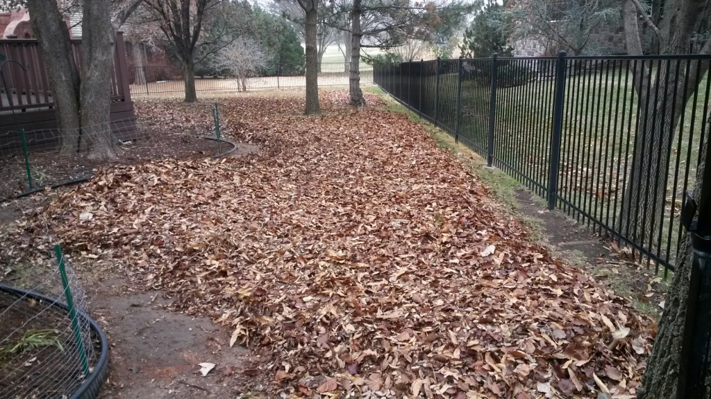 Yard Maintenance - Clean up Leaves - Before - Wichita