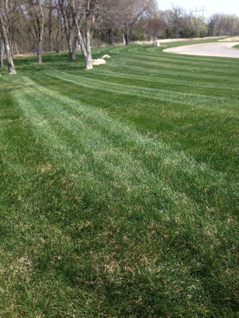 Professional Lawn Mowing Service - Wichita
