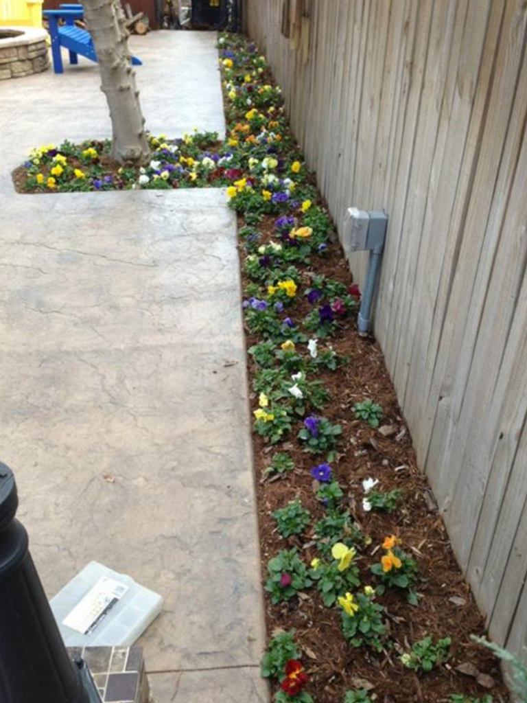 Planted Flowers - Wichita