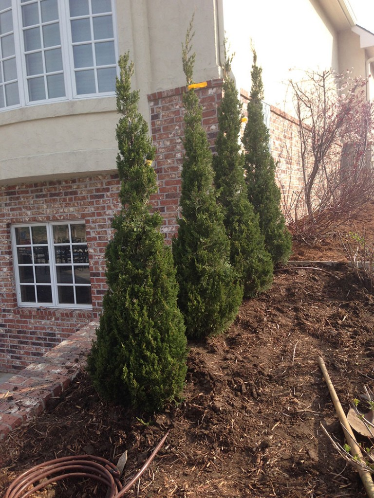 Shrub Planting - Wichita
