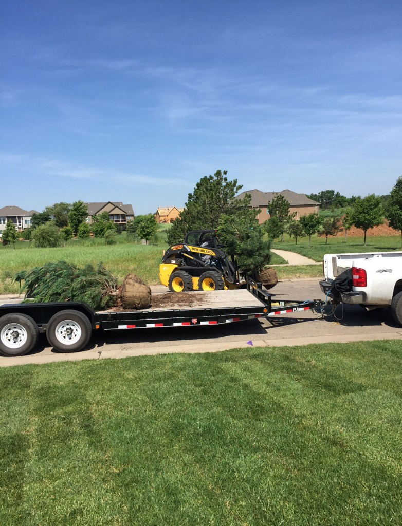 Tree Planting - Wichita