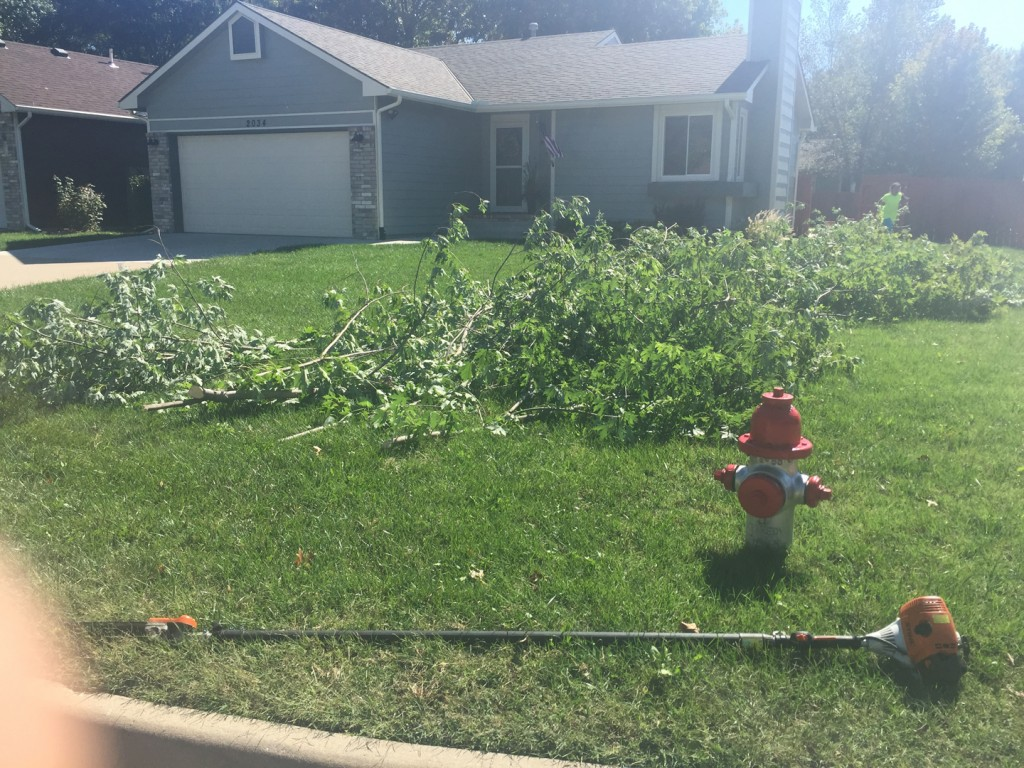 Tree Trimming - Wichita