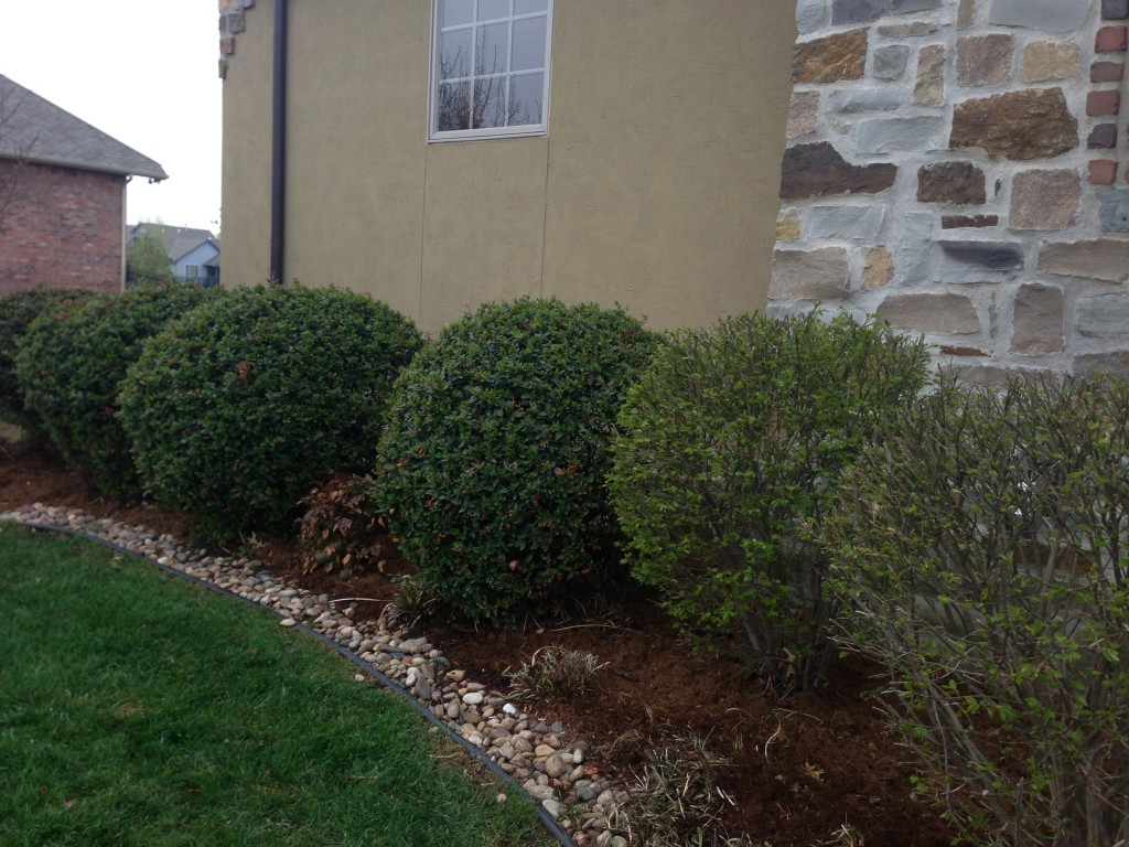 Trimming Shrubs - Wichita