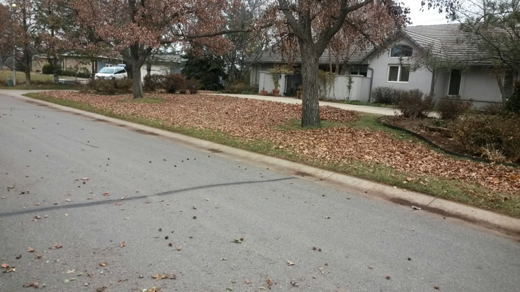 Yard Maintenance - Clean up Leaves - Before - Wichita